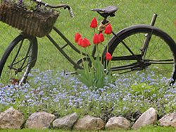 bike and tulips